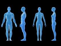 Cuerpo hembra-varón humano del rayo x Concepto de la anatomía El aislante, 3d rinde Foto de archivo