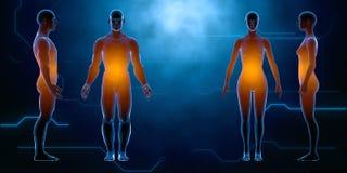 Cuerpo hembra-varón humano del rayo x Concepto de la anatomía El aislante, 3d rinde Fotografía de archivo libre de regalías