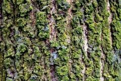 Cuerpo hermoso del árbol en fondo aislado imágenes de archivo libres de regalías
