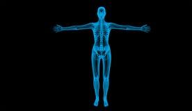 Cuerpo humano Imagen de archivo