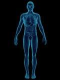 Cuerpo humano Fotos de archivo