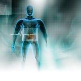 Cuerpo humano Fotos de archivo libres de regalías