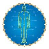 Cuerpo humano abstracto para la presentación médica Imagen de archivo libre de regalías
