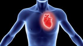 Cuerpo humano con el corazón Fotos de archivo