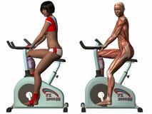 Cuerpo humano femenino - bici de ejercicio Imagen de archivo libre de regalías