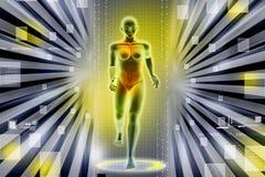 Cuerpo humano femenino de la mujer Imágenes de archivo libres de regalías