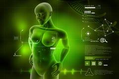Cuerpo humano femenino de la mujer Imagenes de archivo