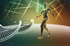 Cuerpo humano femenino de la mujer con la DNA Fotografía de archivo