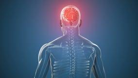 Cuerpo rotatorio con el cerebro y el esqueleto visibles ilustración del vector