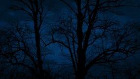 Cuerpos oscuros del árbol en Windy Night almacen de video