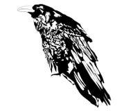 Cuervo Ilustración del Vector