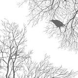 Cuervo Imagenes de archivo