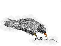 Cuervo Imagen de archivo libre de regalías
