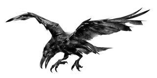 Cuervo aislado exhausto del pájaro de vuelo stock de ilustración