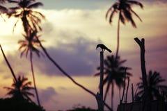 Cuervo con la presa Fotografía de archivo