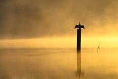 Cuervo de alta mar a calentar en la salida del sol en la niebla en un lago tranquilo Fotografía de archivo