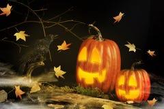 Cuervo de Halloween que habla con las Jack-O-linternas fotos de archivo