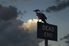 Cuervo de la puesta del sol Fotos de archivo