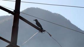 Cuervo de la selva en el Himalaya La India metrajes