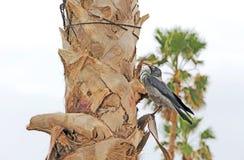 Cuervo de la sudadera con capucha en un tronco de árbol foto de archivo