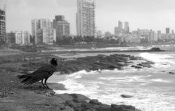 Cuervo de Mumbai Imágenes de archivo libres de regalías