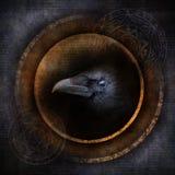 Cuervo del demonio imagenes de archivo