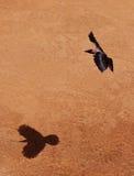 Cuervo del vuelo Foto de archivo