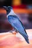 Cuervo en banco fotografía de archivo libre de regalías