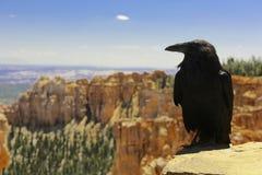 Cuervo en Bryce Canyon National Park Fotografía de archivo libre de regalías