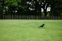 Cuervo en el castillo, Japón Fotos de archivo libres de regalías