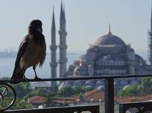 Cuervo en Estambul foto de archivo libre de regalías