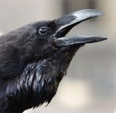 Cuervo en la torre Imagenes de archivo