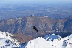 Cuervo en los Pirineos Imagen de archivo