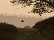 Cuervo en pista foto de archivo libre de regalías