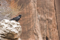Cuervo en roca Imágenes de archivo libres de regalías