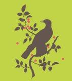 Cuervo en una ramificación Foto de archivo
