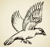Cuervo en vuelo Bosquejo del vector Imagen de archivo libre de regalías