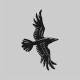 Cuervo grande Fotos de archivo