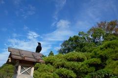 Cuervo japonés en una linterna Imagen de archivo libre de regalías
