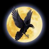 Cuervo negro ilustración del vector