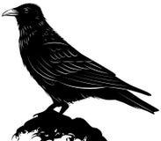 Cuervo negro del vector en el fondo blanco Foto de archivo libre de regalías