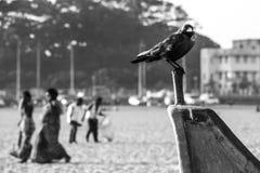 Cuervo negro que se sienta en el barco foto de archivo