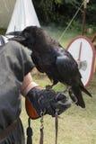 Cuervo que habla Imagenes de archivo