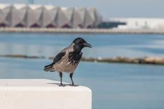 Cuervo que se sienta en la cerca de la costa Foto de archivo libre de regalías