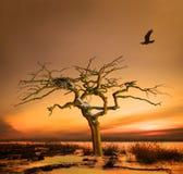 Cuervo que vuelve a casa Fotos de archivo