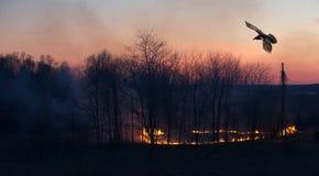 Cuervo sobre el fuego de la hierba en la puesta del sol. Fotografía de archivo