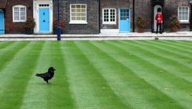 Cuervo y protector en la torre de Londres Foto de archivo