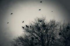 cuervos Foto de archivo libre de regalías