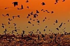 Cuervos de la puesta del sol Imágenes de archivo libres de regalías