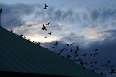 Cuervos de la tormenta Imagenes de archivo